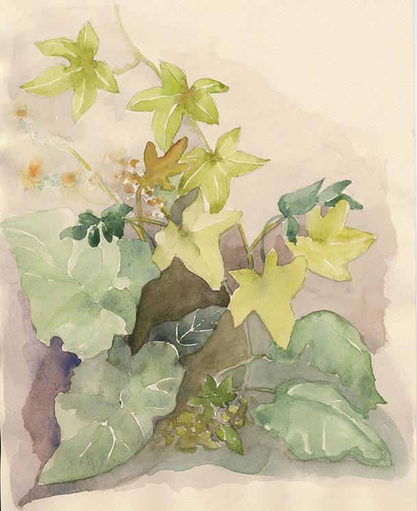 coco-connolly-everwood-farmstead-flora-watercolor.jpg