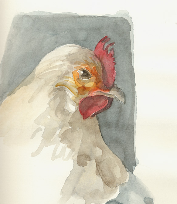 Greta's friend Helen.                                                                                                Chicken portraits: watercolor on Arches 140# hot press paper, approx. 9 x 12 in. except the Babies who are on cold press paper.