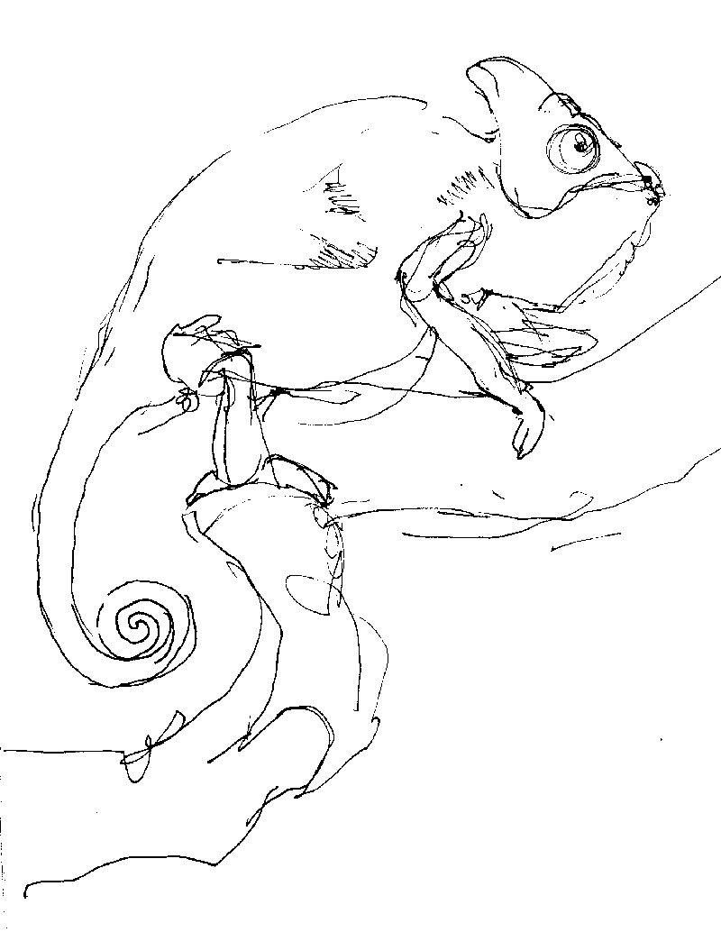 coco-connolly-old-veiled-chameleon.jpg