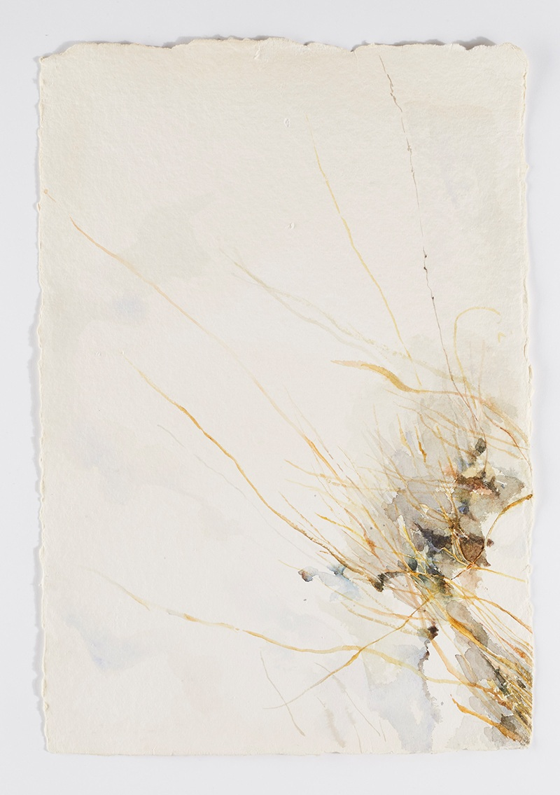 Weeds in snow 1: Watercolor on handmade paper, 12 x 18 in / 31 x 46 cm