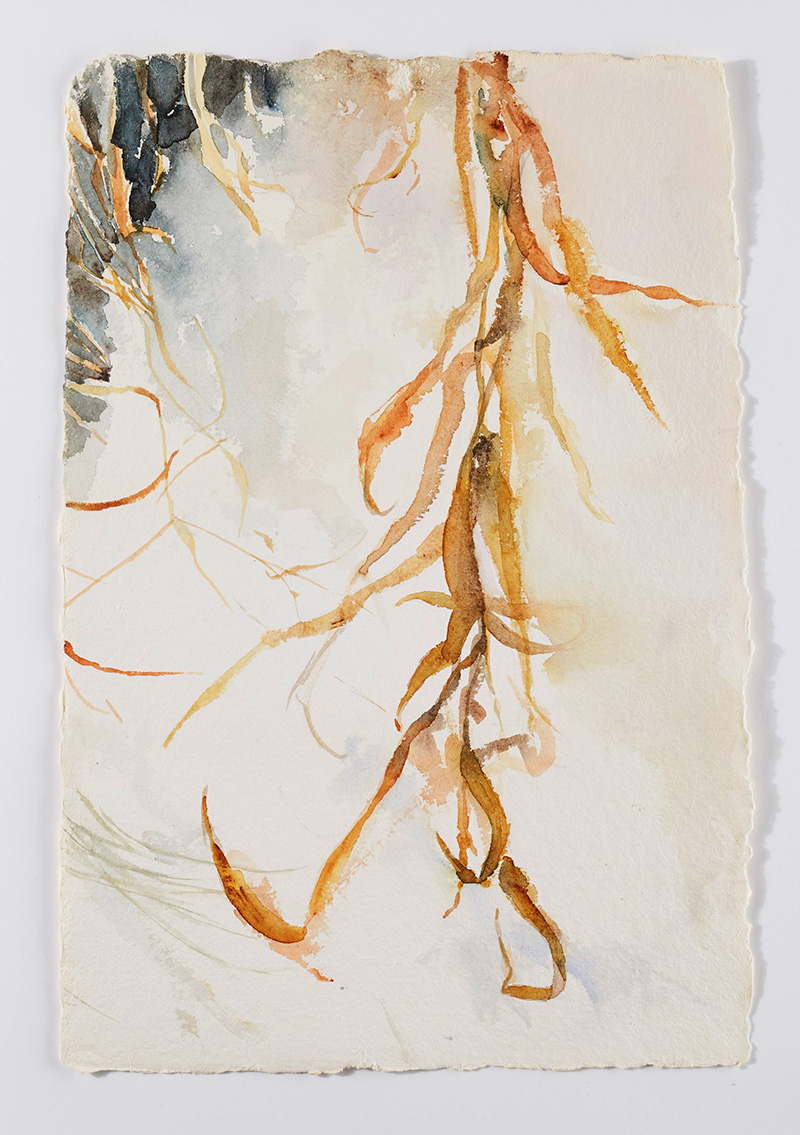 Weeds in snow 3: Watercolor on handmade paper, 12 x 18 in / 31 x 46 cm