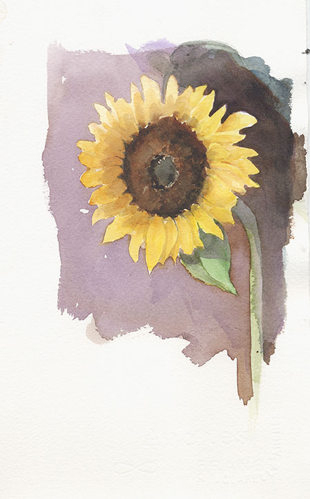 coco-connolly-one-sunflower-watercolor-sketch.jpg