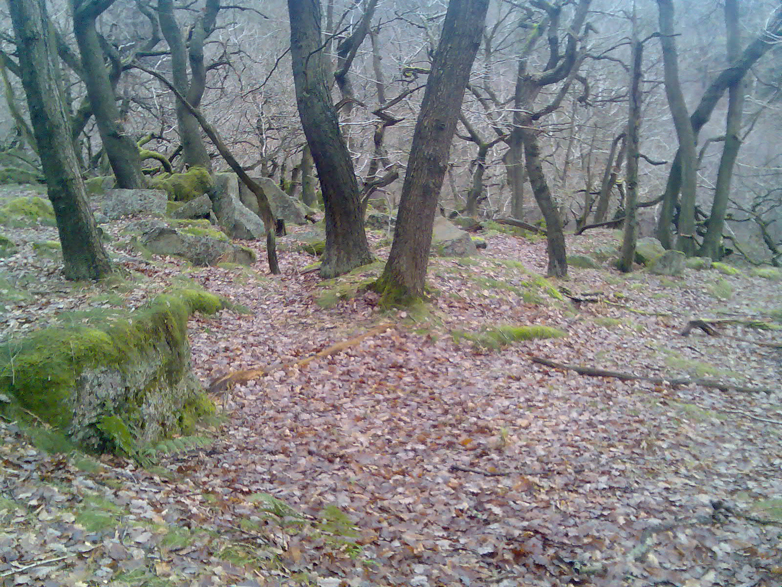 Padley Gorge.jpg