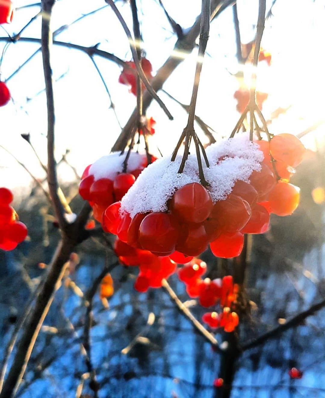 Wild Cranberries.jpg