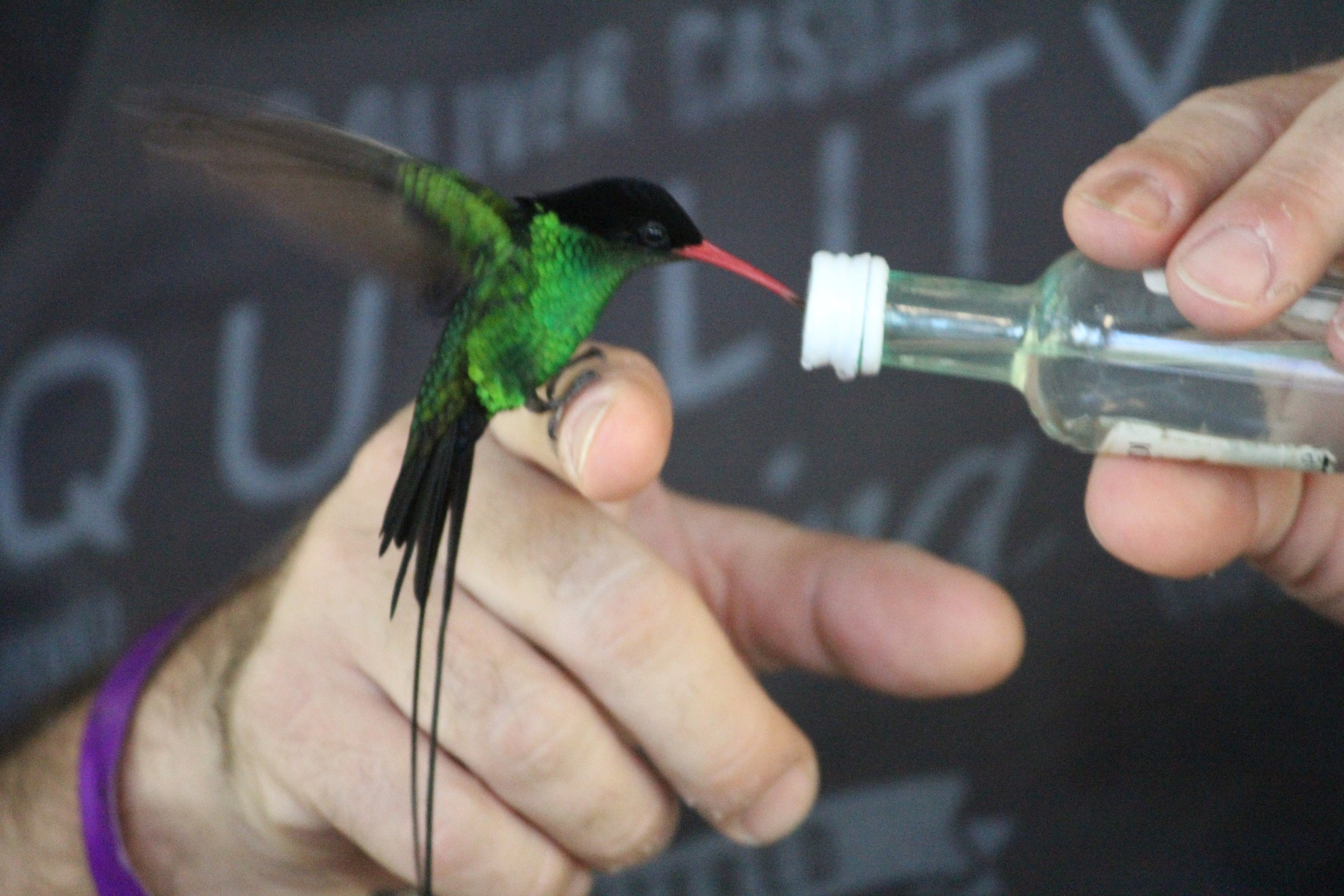 ROCKLAND BIRD SANCTUARY -