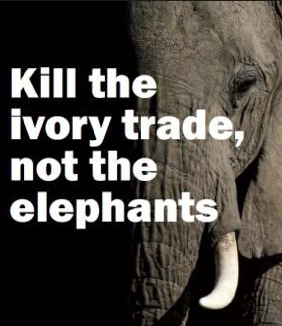 Stop the ivory trade, shop responsibly on vacation.