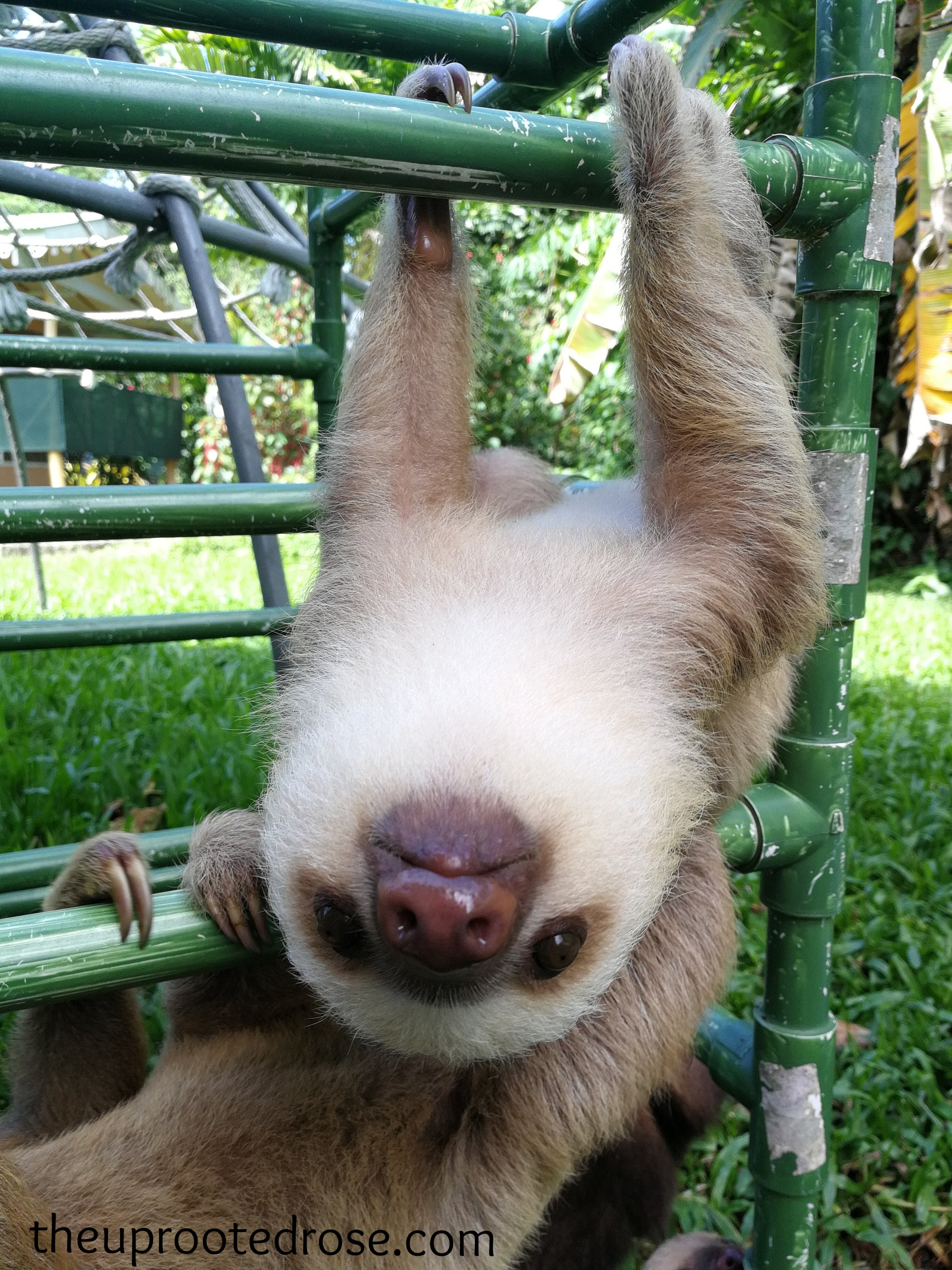 To learn more about sloths, click  here .