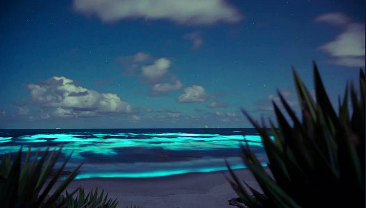 Noctilucas are a marine-dwelling species that exhibit bioluminescence when disturbed by motion.