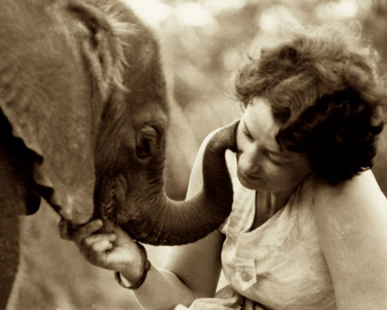 Daphne Sheldrick dedicated the last 60 years of her life to the protection of wildlife in Kenya. Read about here contribution to wildlife conservation  here  on Good Nature Travel.Source: The David Sheldrick Wildlife Trust