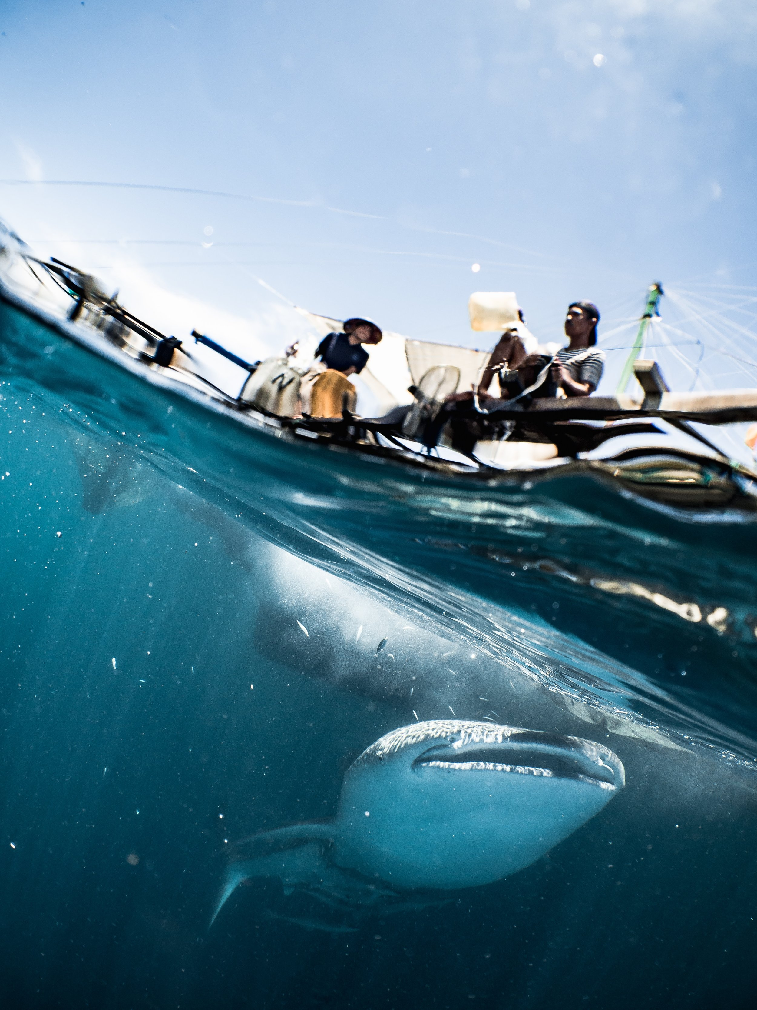 Shark cage diving, specifically with great whites, comes with a host of problems for shark populations. Find out more on Green Travel Suitcase's blog  here .