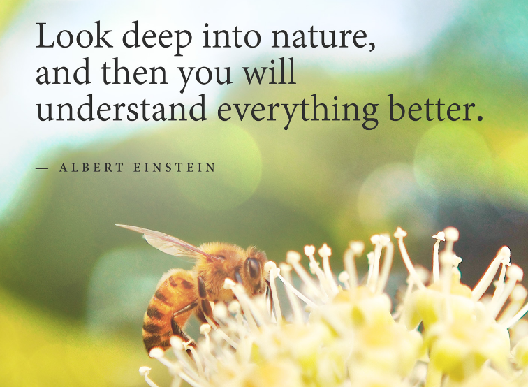 """Look deep into nature, and then you will understand everything better.""  — Albert Einstein quotes about protecting and loving nature"