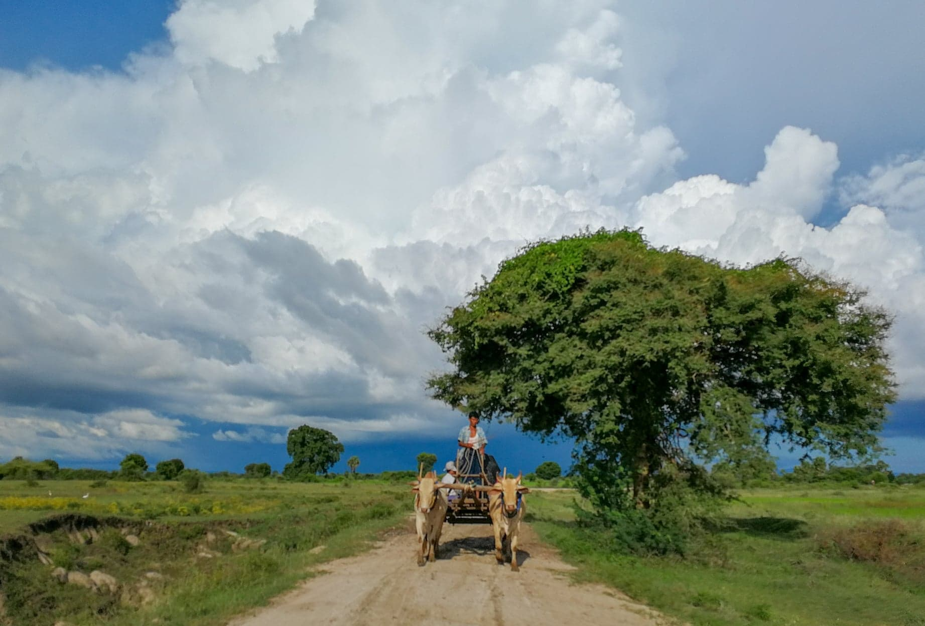 Rainy season in Myanmar. Ox cart being drawn near Mandalay, Burma.