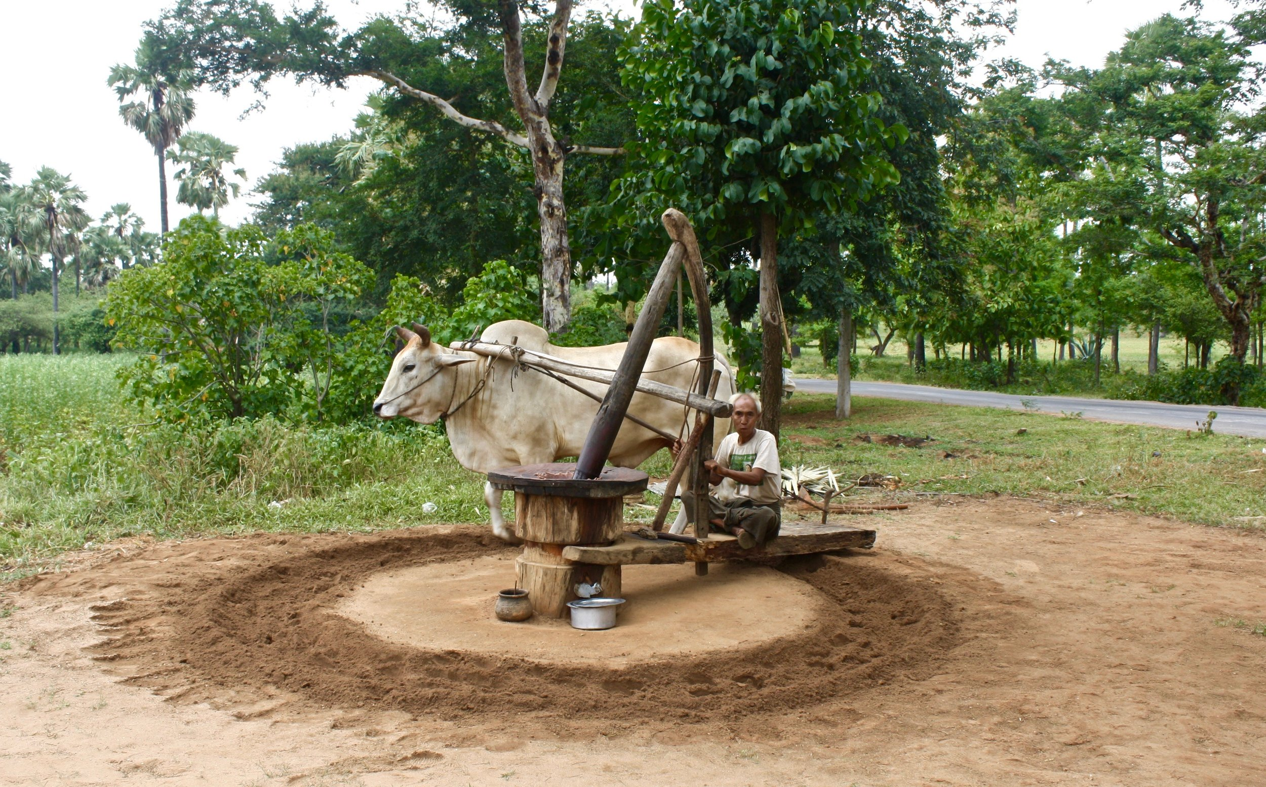 The process of making alcohol from sugar cane. Photo taken near Bagan, Myanmar.