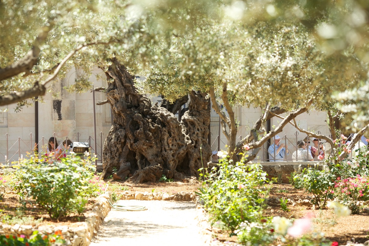 Gethsemane: East Jerusalem
