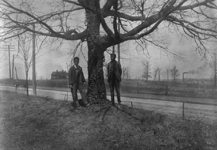 """""""Two African American men standing next to a tree in Georgia,"""" W.E.B. Du Bois, African American Photographs Assembled for 1900 Paris Exhibition, Prints and Photographs Division, Library of Congress."""
