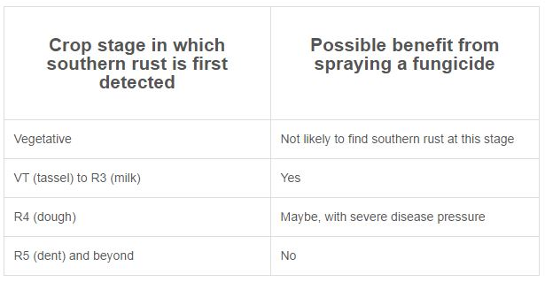 Table 1. Possible benefit from spraying a fungicide at different corn developmental stages in which southern rust is first detected. (Table modified from  Texas A&M University publication )