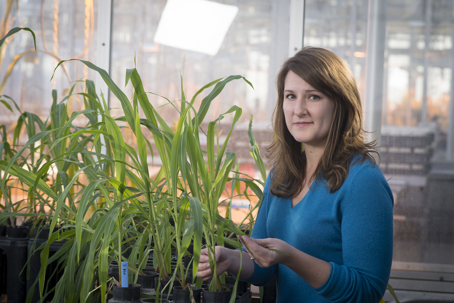 Fig. 1. Dr. Kiersten Wise is an Extension Plant Pathologist with responsibilities in field crops at the University of Kentucky.