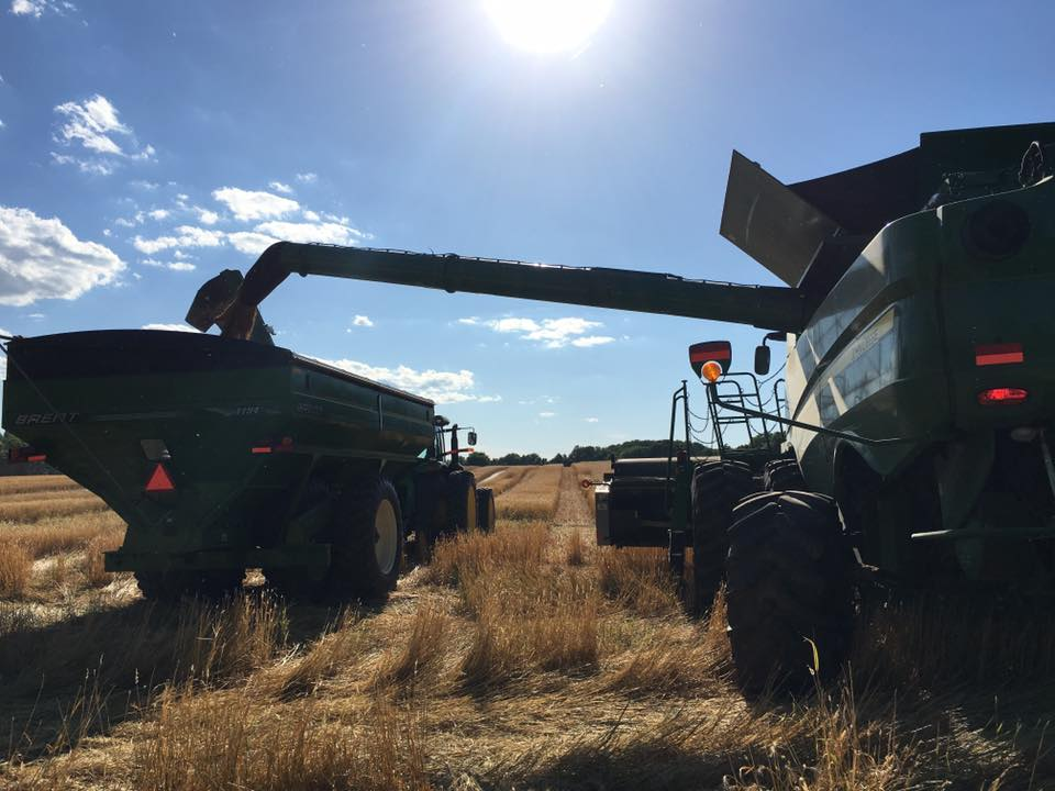 Wheat Harvest, courtesy of Long Vue Farms, Allensville.