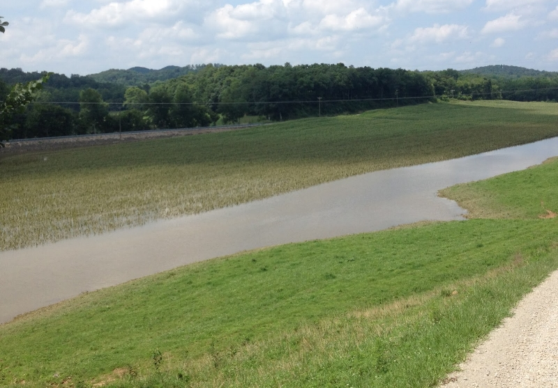 Flooded corn. Water was above the ear for over 24 hours. We expect this field to be a complete lost. Credit: Chad Lee