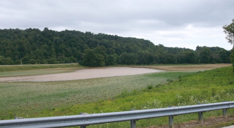 Soybeans flooded out in Rowan County.The water needs to recede in about 24 or 48 hours for the plants to survive.Credit: Bob Marsh, Rowan County Extension.