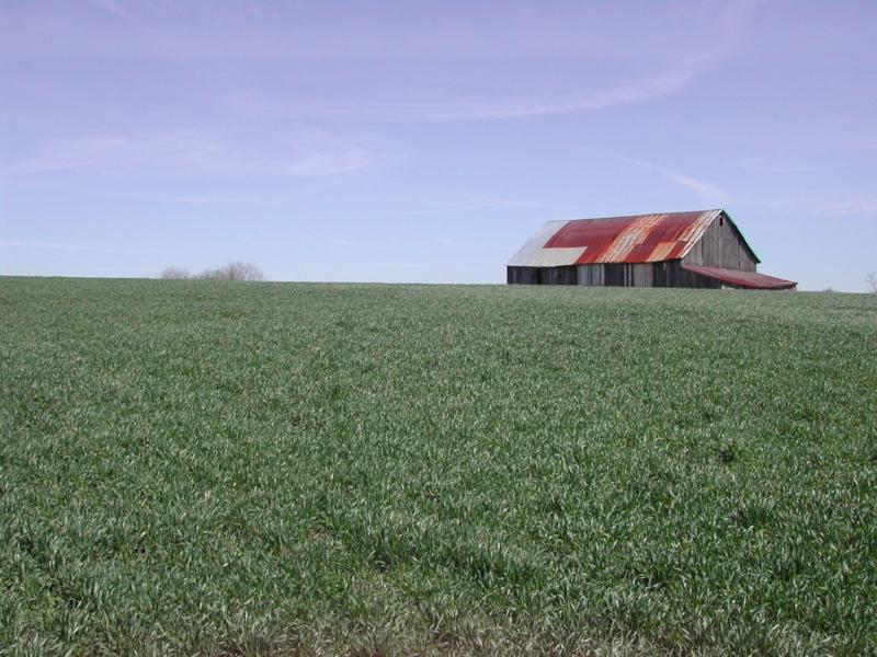winterwheat.jpg
