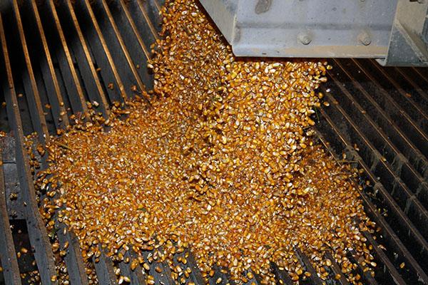 corn pit - w.jpg