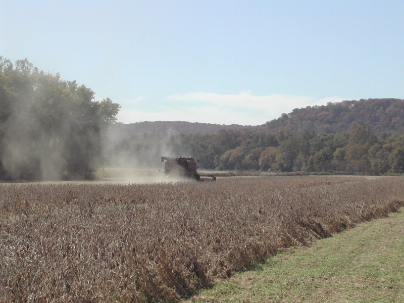 soybean harvest.png