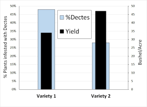 Figure 4. Percentages of plants with live larva or tunnels caused by Dectes stem borer from a random subsample of 25 plants per cultivar from a commercial field in Hickman County, KY.