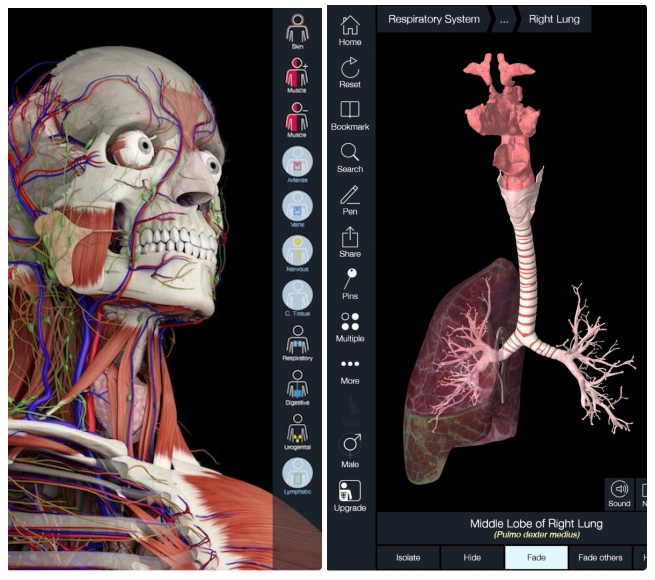 - Essential Anatomy 5