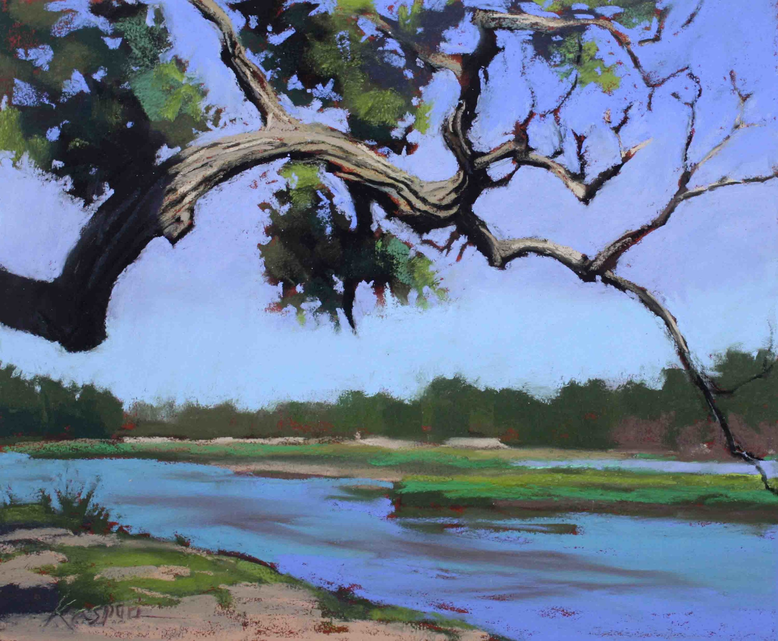 Platte River Cottonwood  by Debby Kaspari