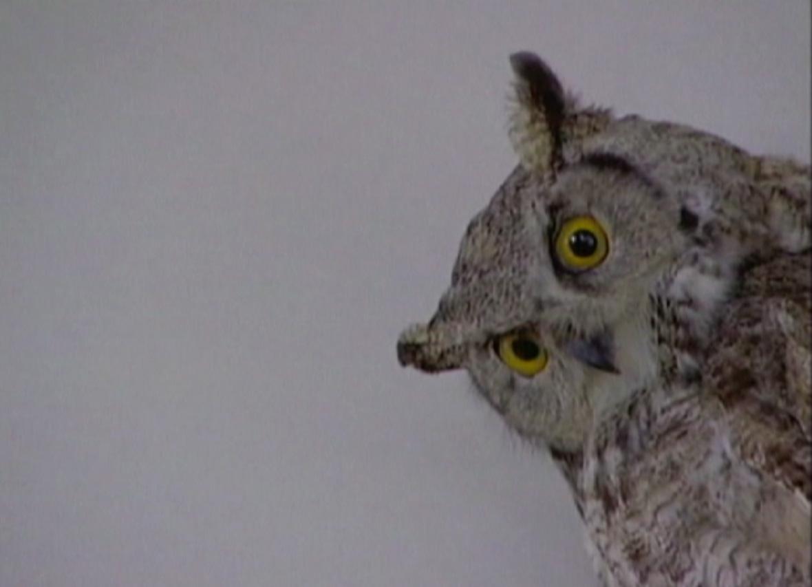Stuffed Owl.jpg