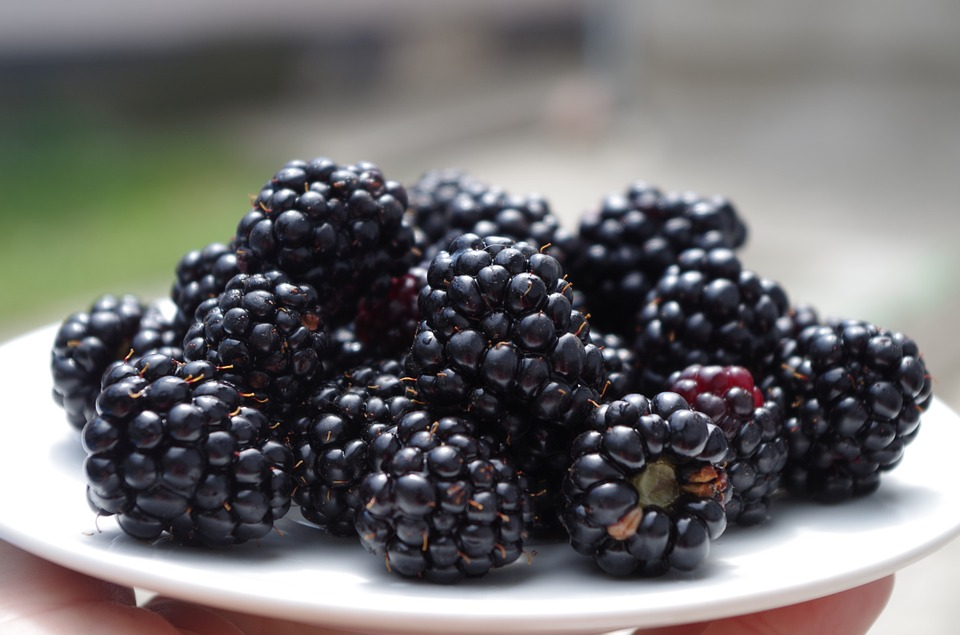 Blackberries on a saucer