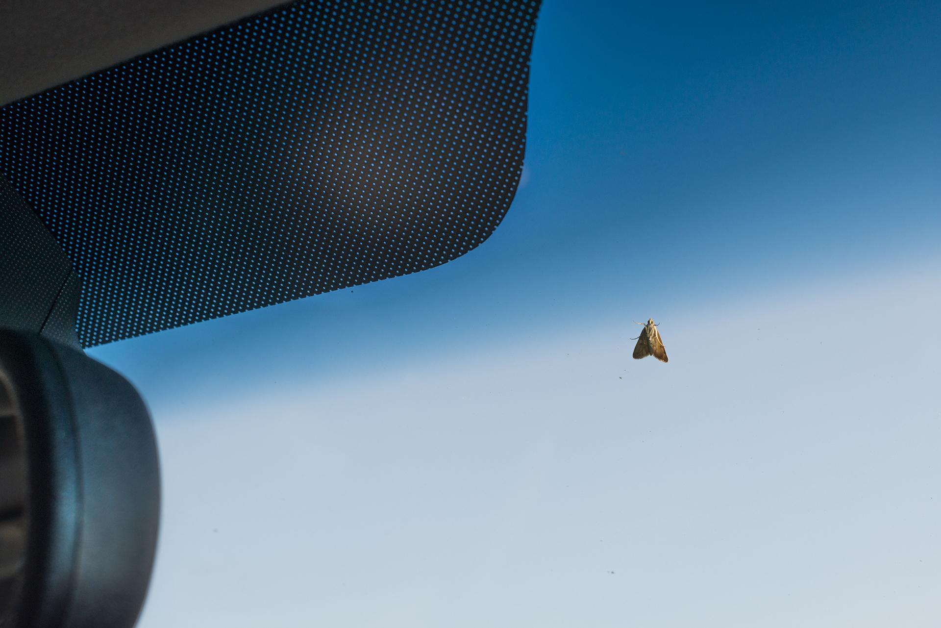 Smith_Moth.jpg