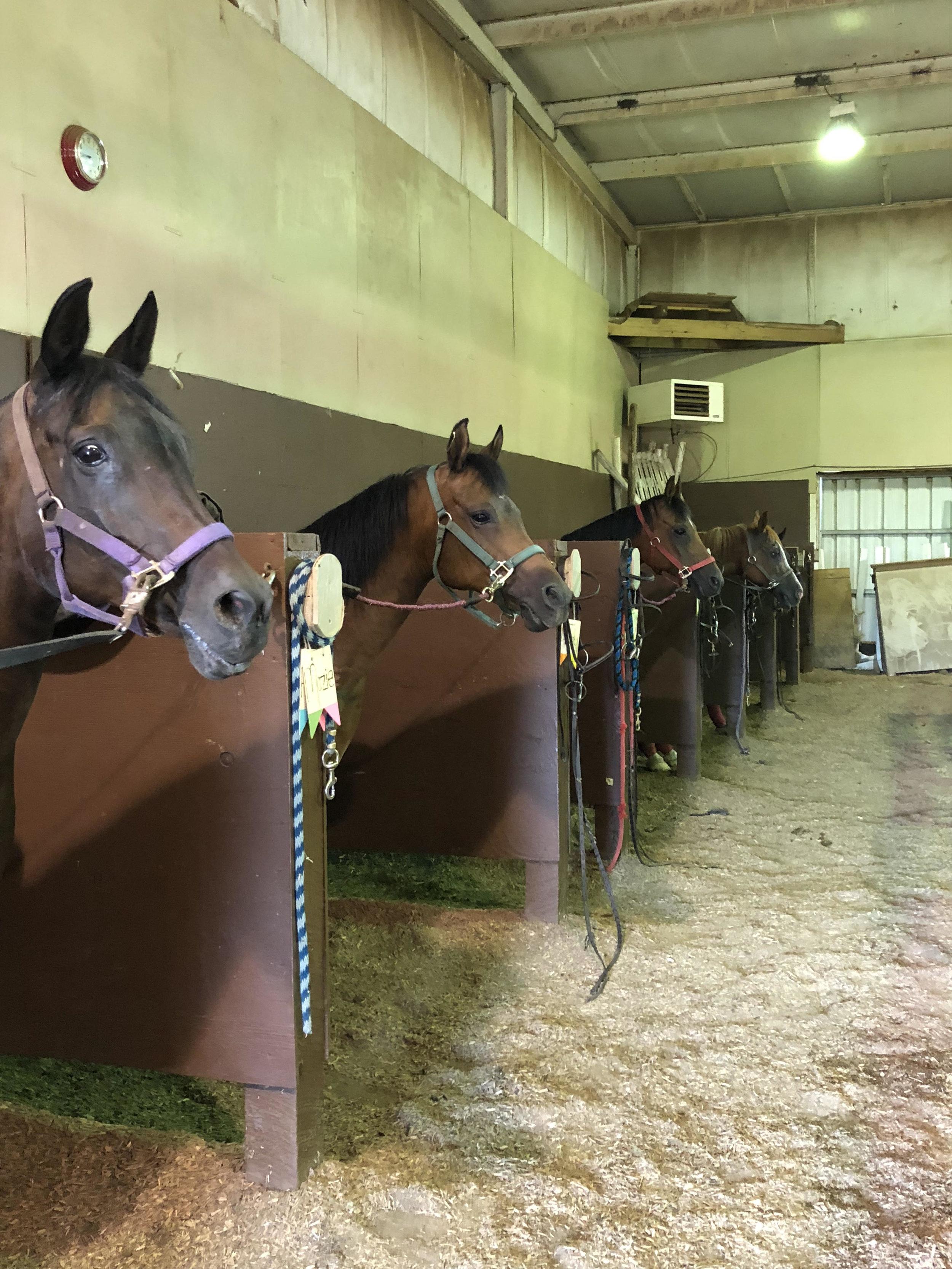 camp_horses_2018.jpg