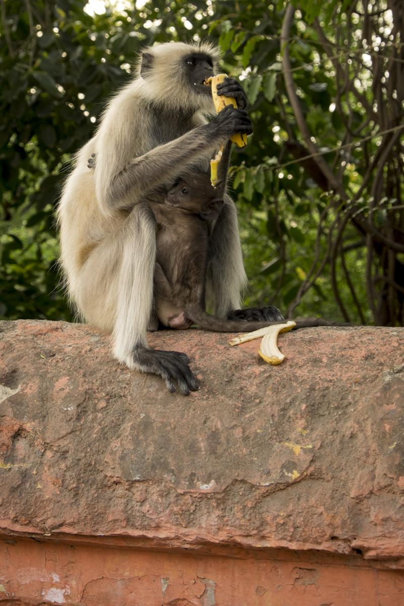 Udaipur_013.jpg