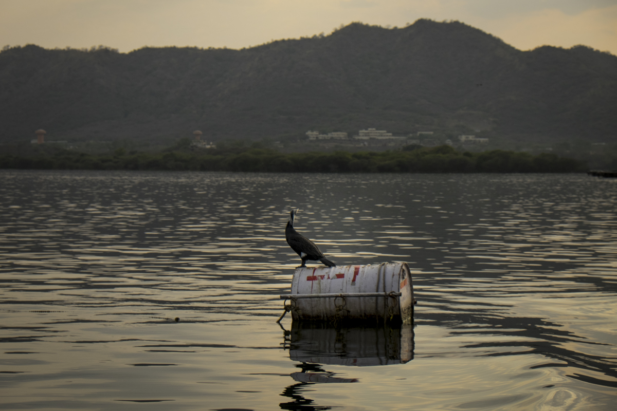 Udaipur_015.jpg