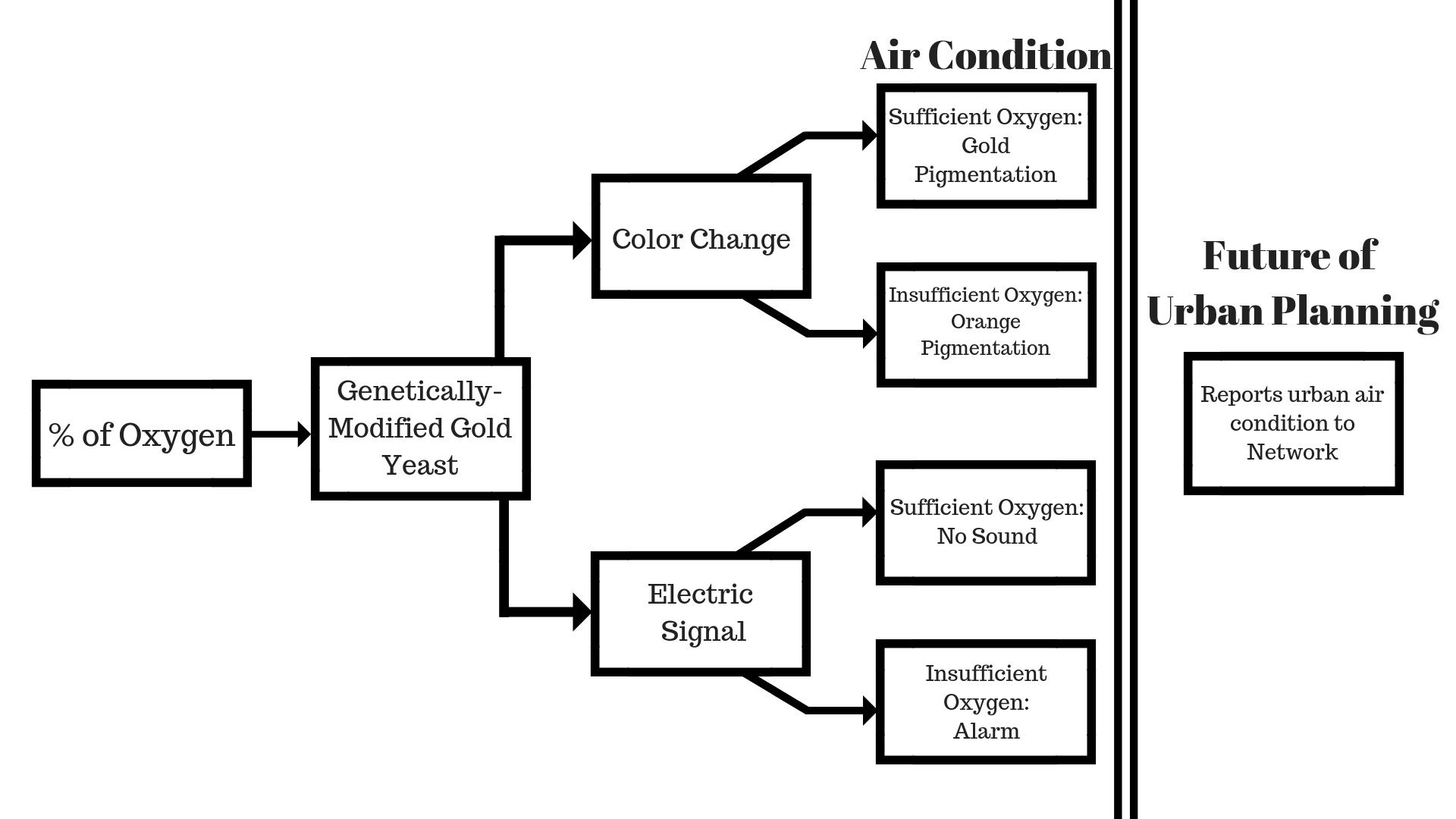 A chain process diagram of Sensaira's outputs.