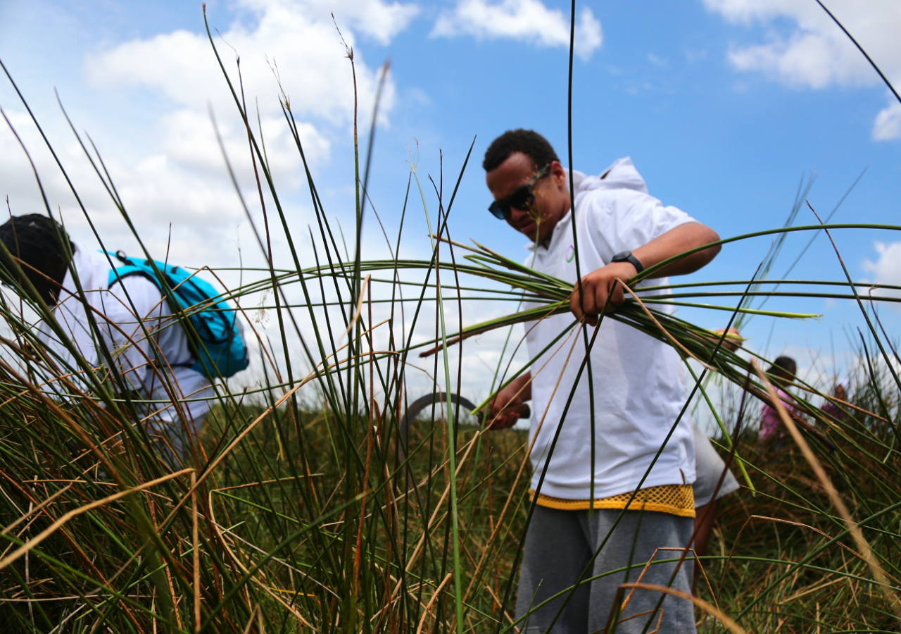 Cultural Experiences: Collecting Reeds for Weaving