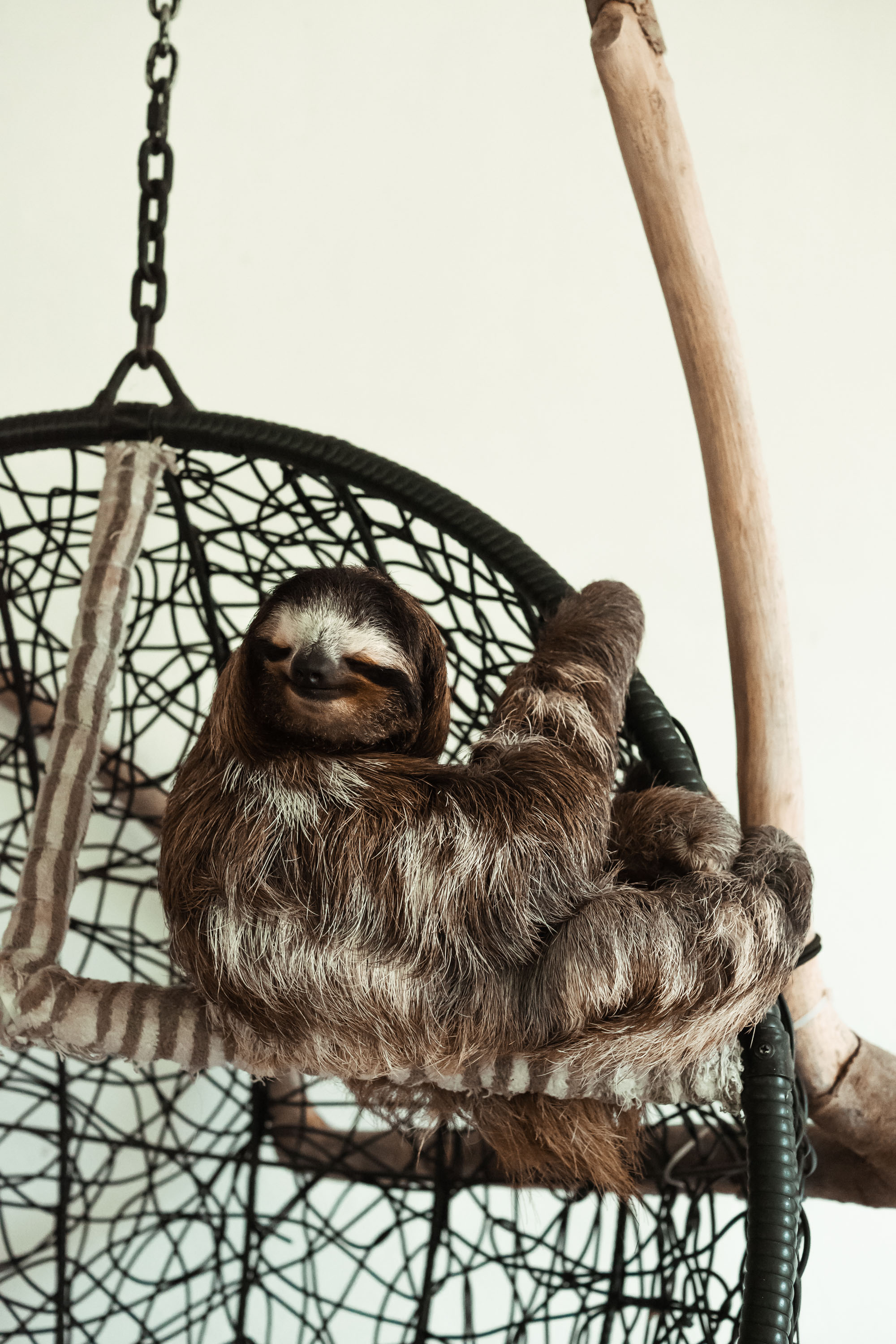 Buttercup the Sloth.jpg