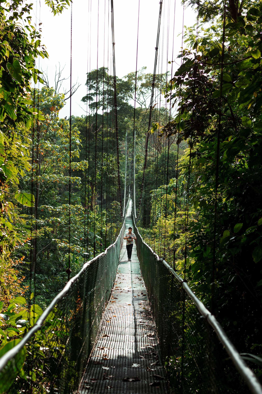 Tropical Bridge.jpg