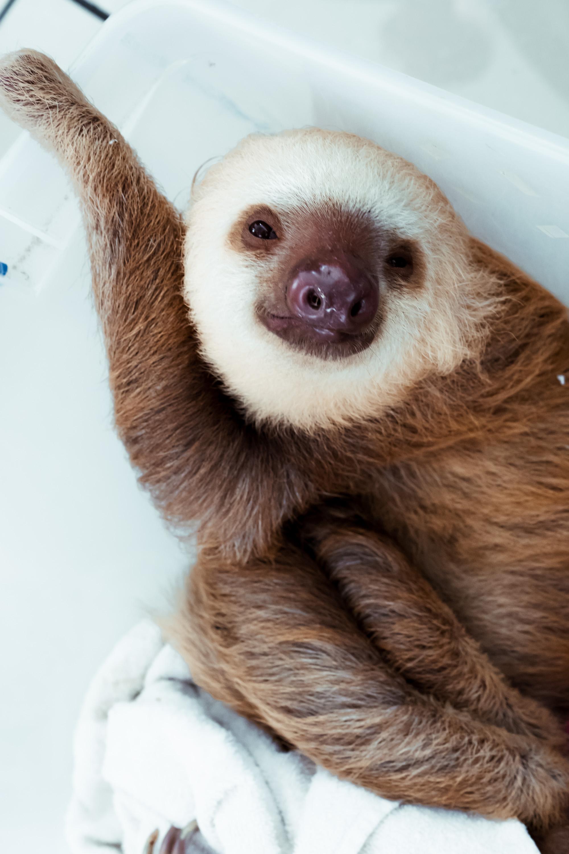 Sloth 2 copy.jpg