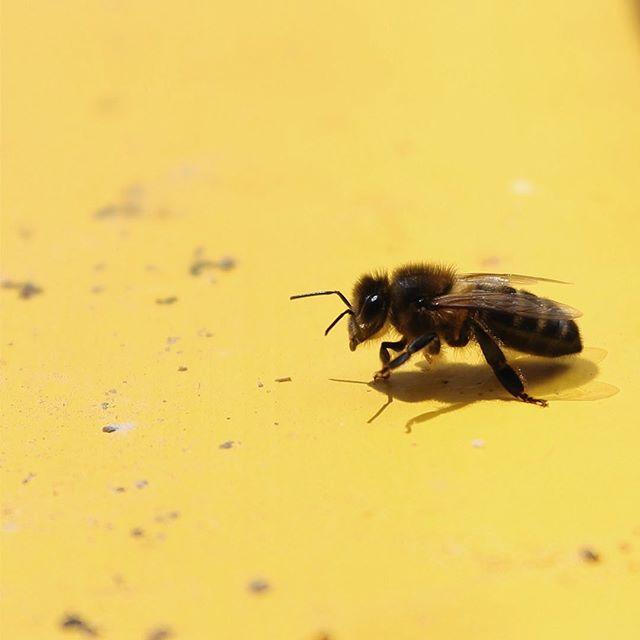 ✨BCNHoneyFest✨ ¿Quieres aprender sobre el mundo de las abejas y de como podemos ayudarlas?  No te pierdas nuestra tercera edición del único festival dedicado a las abejas en la ciudad de Barcelona.  #barcelona #bcnhoneyfest #honeyfest #abejas #miel #bees #honey #savethebees #nature #beekeeper #honeybees #flowers #summer #beesofinstagram #naturephotography #photography #apiculture