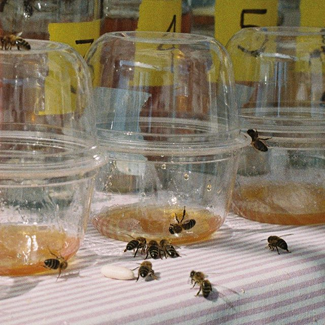 En nuestra pasada edición de BCN Honey Fest contamos con un jurado muy exigente para el concurso de mieles.✨ No olvidéis que para poder participar con una parada, BEEtalks o taller debéis entrar en nuestra página web y seguir los pasos para realizar la inscripción.  #barcelona #bcnhoneyfest #honeyfest #abejas #miel #bees #honey #savethebees #nature #beekeeper #honeybees #flowers #summer #beesofinstagram #naturephotography #photography #apiculture