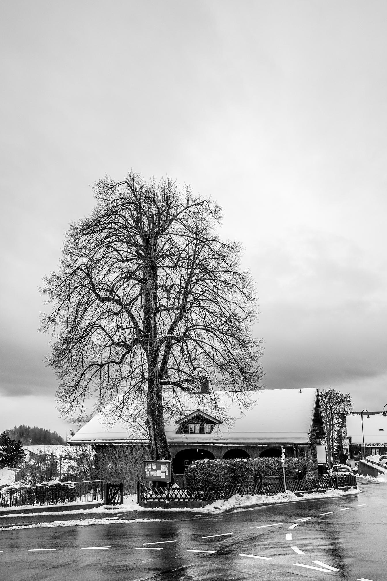 Swiss-161218-winterland-0027.jpg