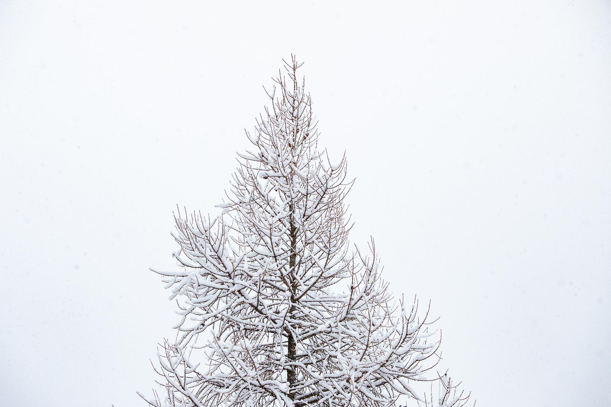Swiss-171218-winterland-0152.jpg