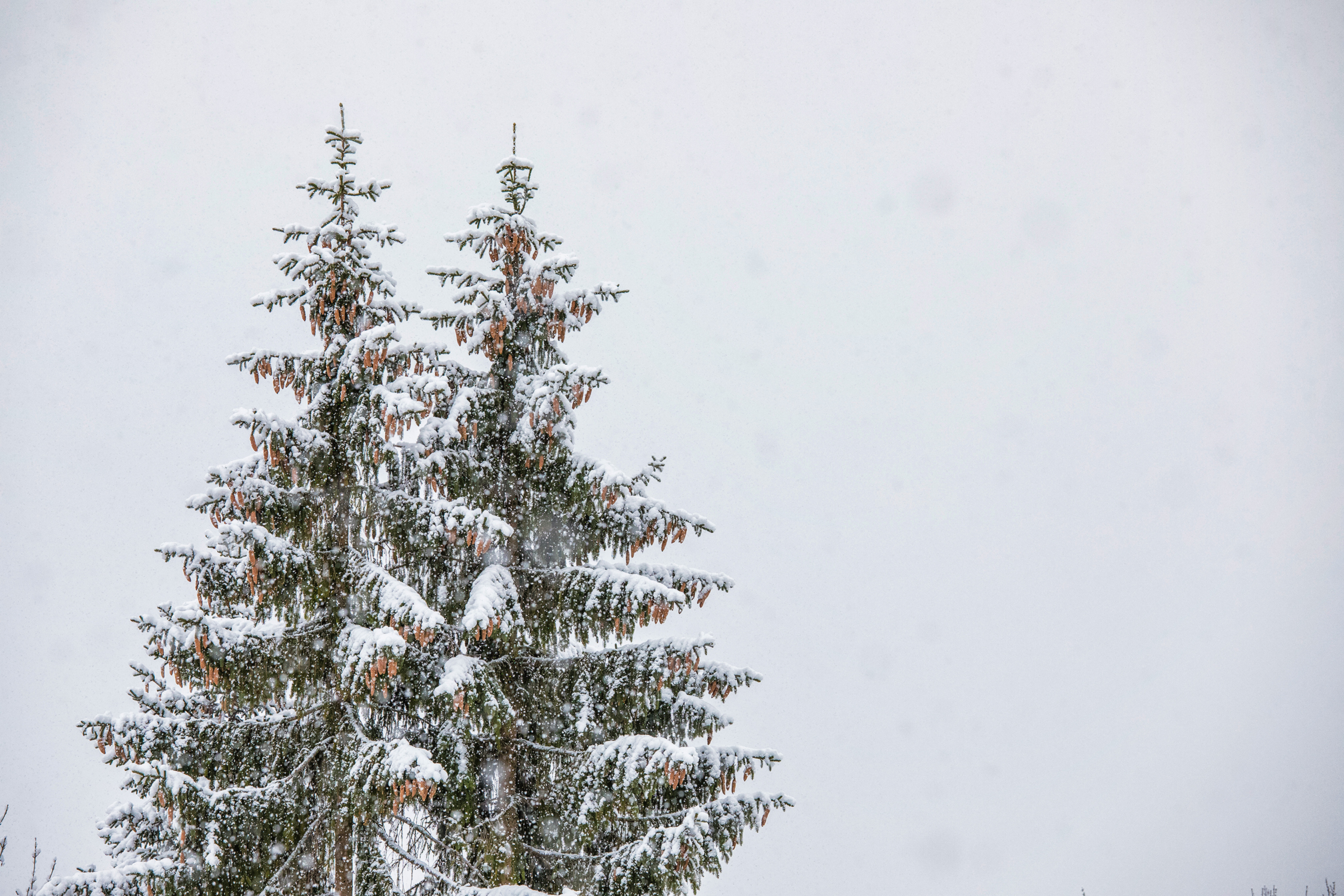 Swiss-171218-winterland-0143.jpg