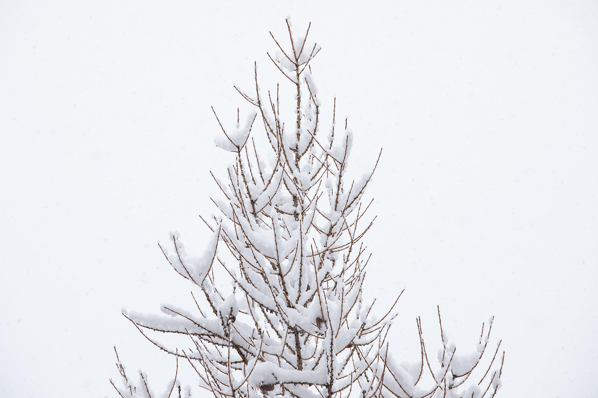 Swiss-171218-winterland-0173.jpg