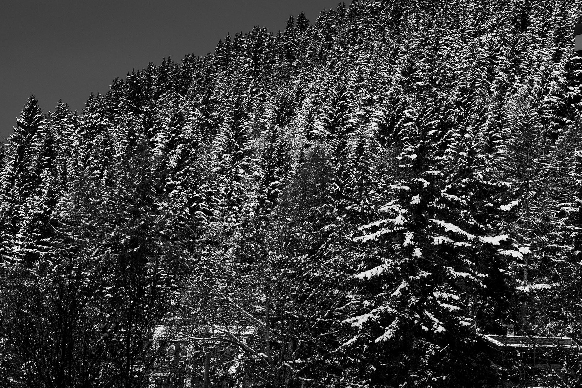Swiss-181218-winterland-0319.jpg