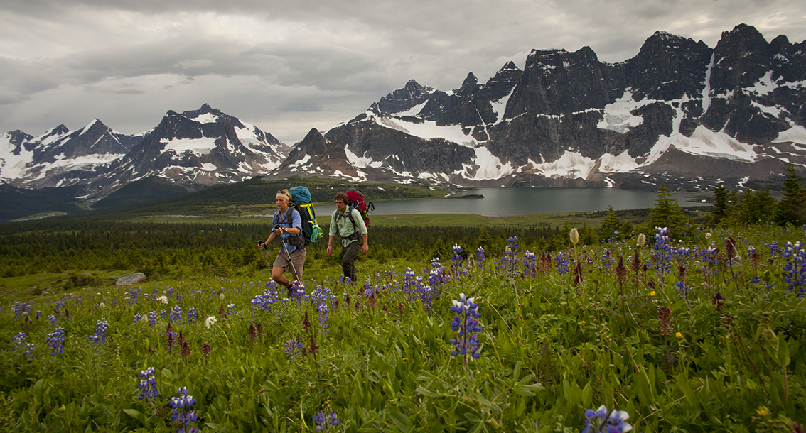 Hiking in Tonquin Valley