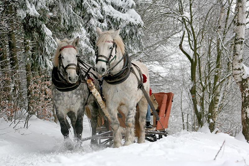 sleigh-ride-horses-the-horse-winter smaller.jpg